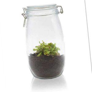 new Sonnentau im Einmachglas ab 29.99 (32.99) Euro im Angebot