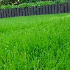 10 kg Schattenrasen Rasensamen Rasensaat Grassamen Rasen Qualität Nachsaat