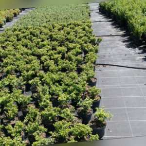 0,65 €/m²    Bodengewebe Gartenvlies Unkrautvlies Bodenschutzgewebe Top Preis