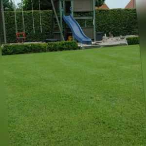 Saatgut Mikroklee Pipolina 50 g Rasenklee für ca. 25 m²