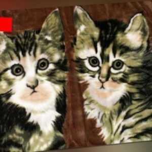 Kuscheldecke Tagesdecke Wohndecke Decke Plaid Katzen Motiv II -