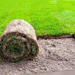 1m² Rollrasen Fertigrasen Rasen Gras frisch vom Feld Per Paket