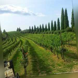 3-4 Tage 3* Hotel Bareta Kulinarik Olivenöl Wein Verona Venetien Urlaub Italien