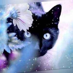 Malen nach Zahlen - Acryl Öl Malerei - Katze und Blumen 50x40cm