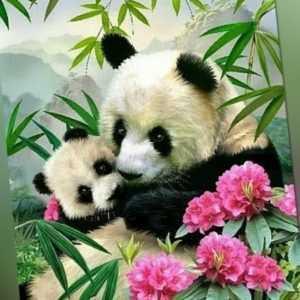Malen nach Zahlen Erwachsene 40x30 cm  Holzrahmen Leinwand Malset Blumen Panda