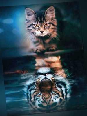 Malen nach Zahlen für Erwachsene - Katze und Tiger
